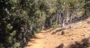 שביל טבע קלדוניה