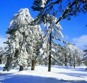 שלג בהרי הטרודוס