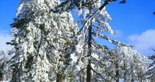 פאפוס בחורף